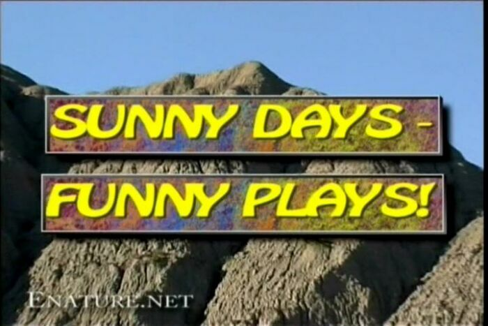 Sunny Days-Funny Plays
